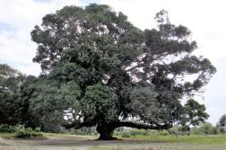 07-18 pretty tree